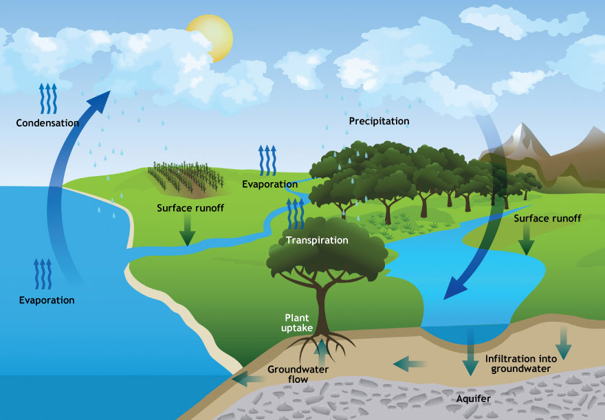 essay on water cycle in nature The water cycle the amount of water on earth is finitethis means that new water cannot be made the water on earth has been recycled over and over again since the earth was formed.