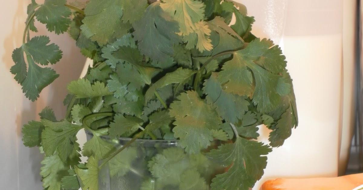 how to keep cut cilantro fresh