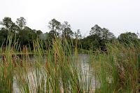 Twelve Mile Swamp