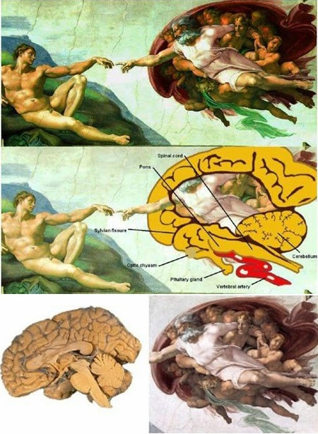 The Creation of Adam: The Floating Brain Divinity