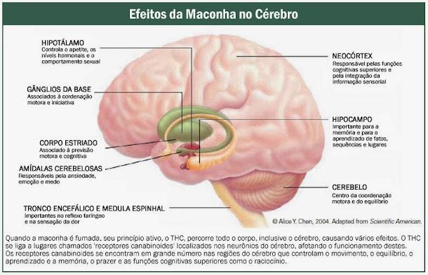 Efeitos da maconha no cérebro
