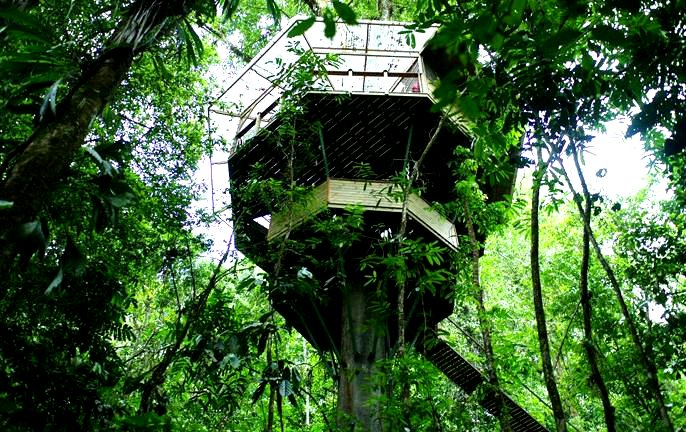 The flying tortoise treehouses in the costa rican for Jungle house costa rica