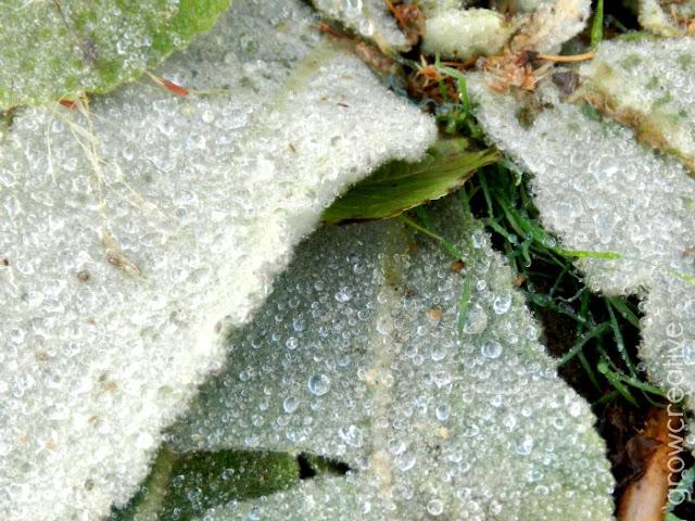frozen leaf: grow creative
