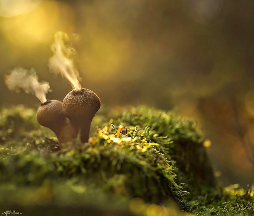 El místico mundo de los hongos.