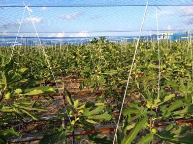 figs c a barquisimeto