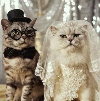 Lustige Bilder Zum Lachen -  LachenistGesund lustige Bilder & Ecards Tierbilder