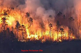 Kebakaran hutan | Kenali Penyebab dan Akibatnya