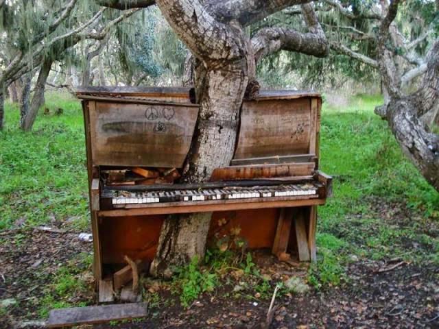 La Naturaleza ocupa lugares abandonados