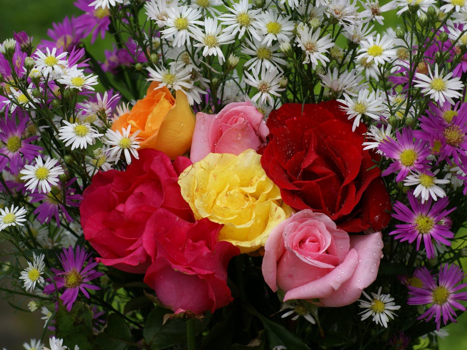 Colores en mi vida simplemente gracias - Fotos de flores bonitas ...
