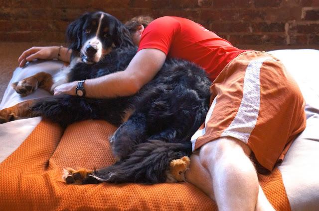 bernise mountain dog, philadelphia