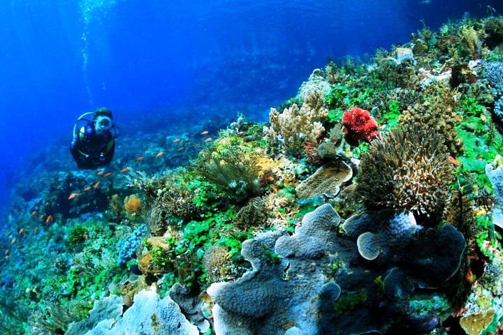 Taman Laut Selat Pantar Alor Nusa Tenggara Timur. ZonaAero