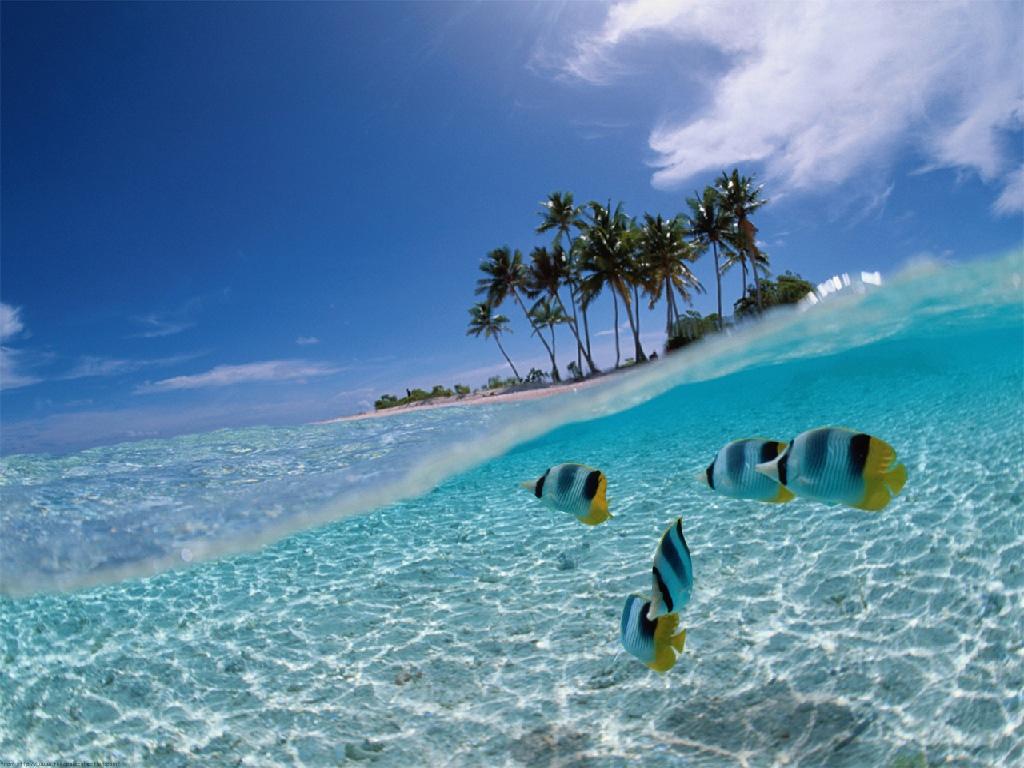 Ketika kau merasa keliru alihkan mata mu ke laut airnya cantik