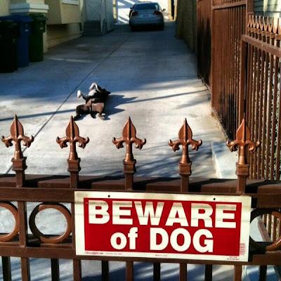 Gefährlicher Hund! Auf dem Rücken ... in der Sonne