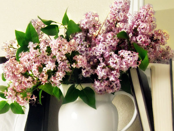 Lilacs:  An Instant Room Freshener