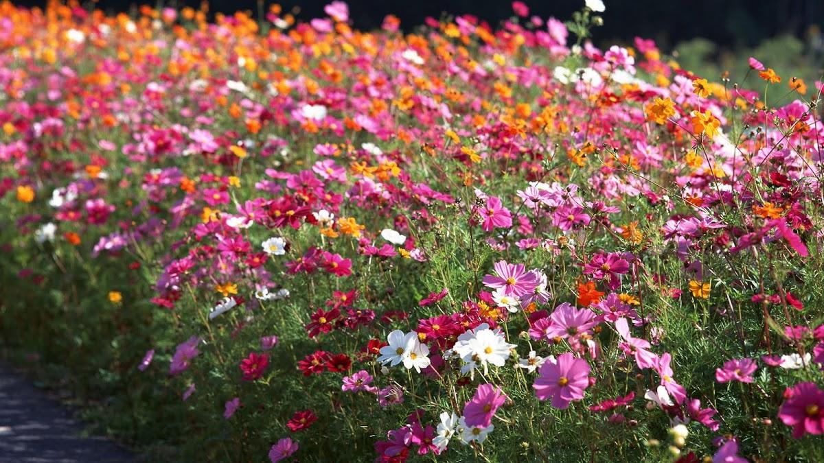 HD Flowers Wallpaper 5