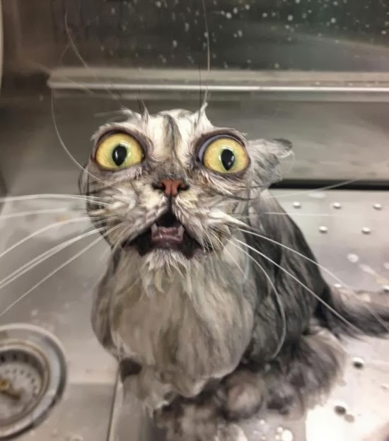 funny wet cats