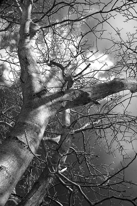 Dnuta Antas Fine Art Photography; trees photography; Polish artists; fine art photographer; Danuta Antas photography; garden photography; garden photographer; beautiful trees; spiritual trees; energy of trees