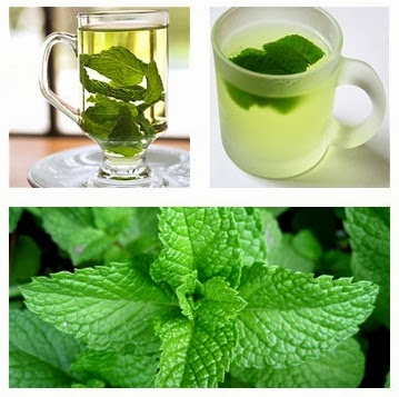 nane çayı, nane çayının faydaları