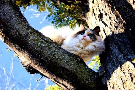 Hypoalergiczne karmy dla kotów