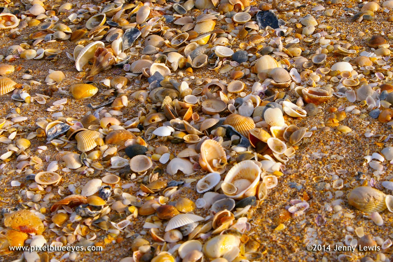 Close up image of the sand covered in so many shells, you can barely see the sand itself.