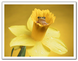 лягушка в цветке
