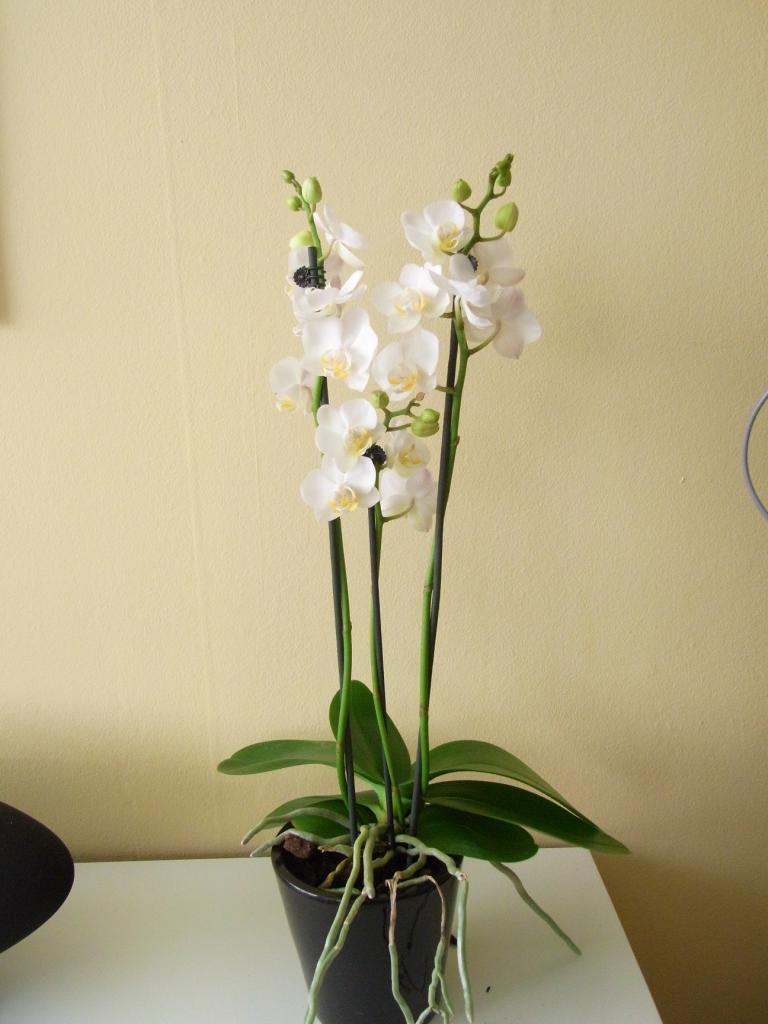 hæklet orkide opskrift dansk
