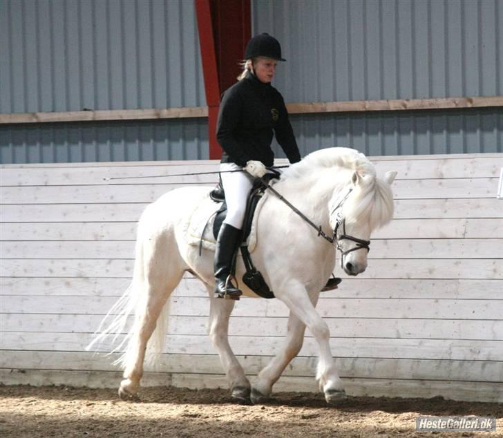 hvite hester bilde