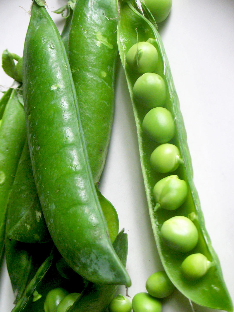 Description. A pea is a most commonly green, occasionally golden yellow, or infrequently purple pod-shaped vegetable, widely grown as a cool season vegetable crop. The seeds may be planted as soon as the soil temperature reaches 10 °C (50 °F), with the plants .