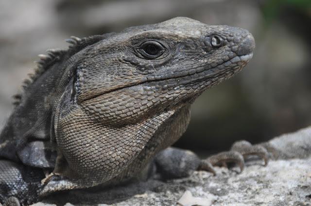 RIVIERA MAYA CON N IÑOS: Algunos de los bichos y animales que nos encontramos