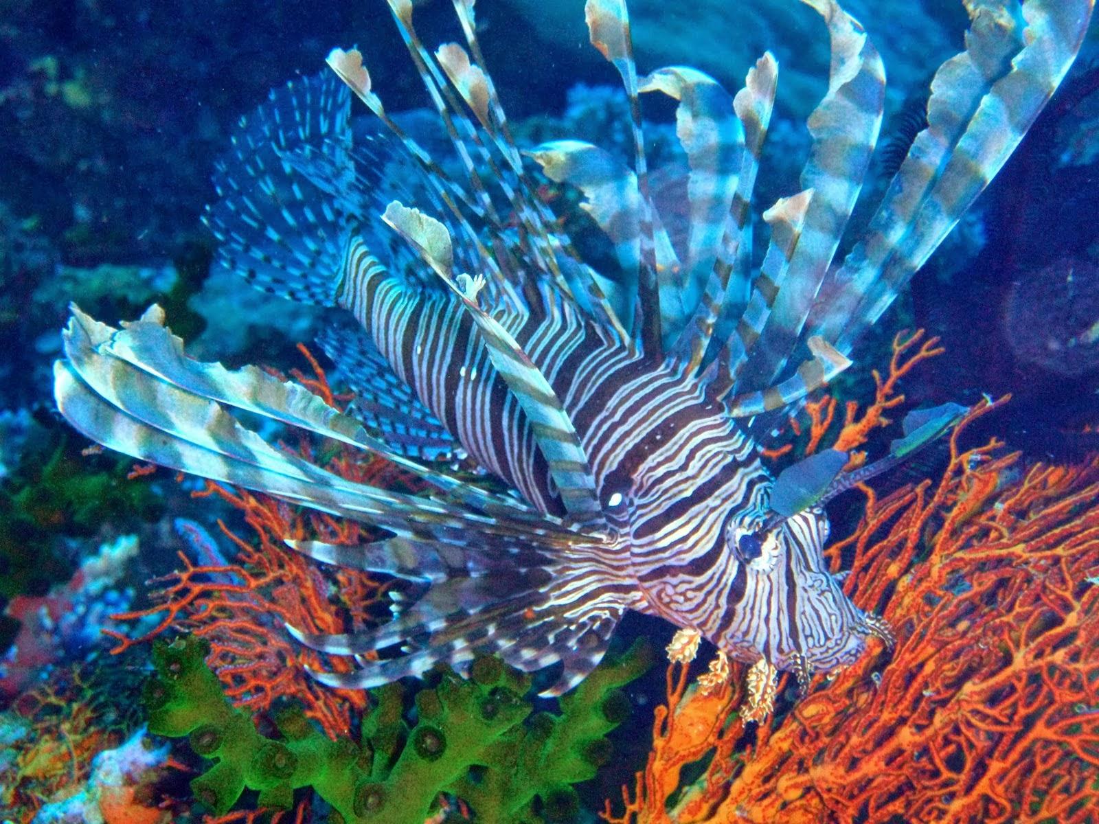 Peces tropicales - Fotos de peces tropicales ...