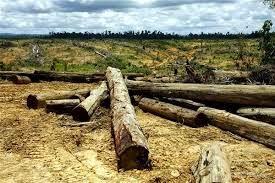 Kumpulan Puisi Tentang Lingkungan Hidup Terbaik 2014