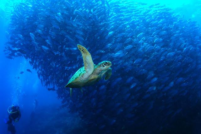 海龟与鱼群