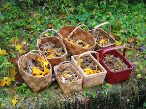 Kesäkodin sienisaalista