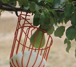 photo of pear picker closeup