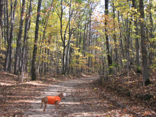 dog in autumn woods