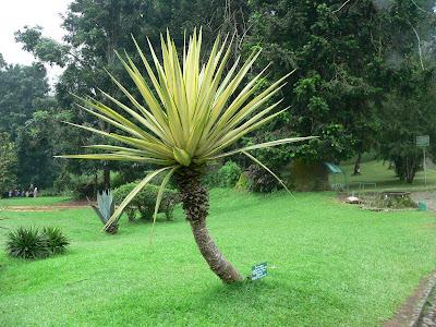 foto tanaman langka