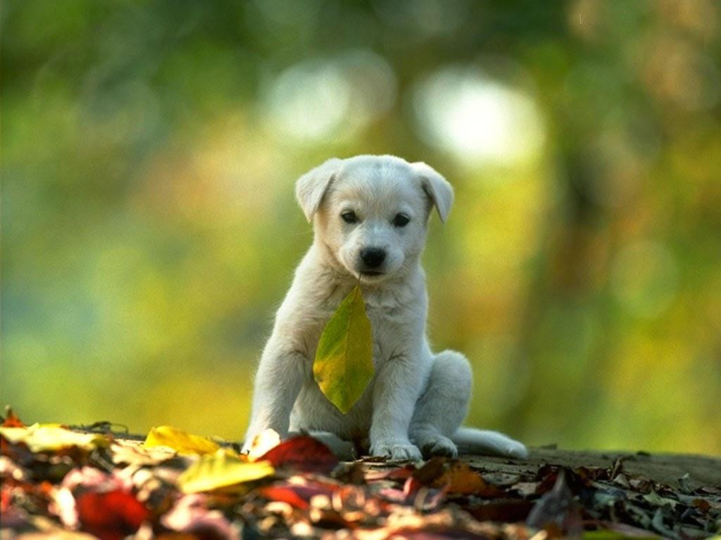 Cute Puppy Widescreen