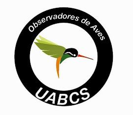 Taller de Observación de Aves UABCS