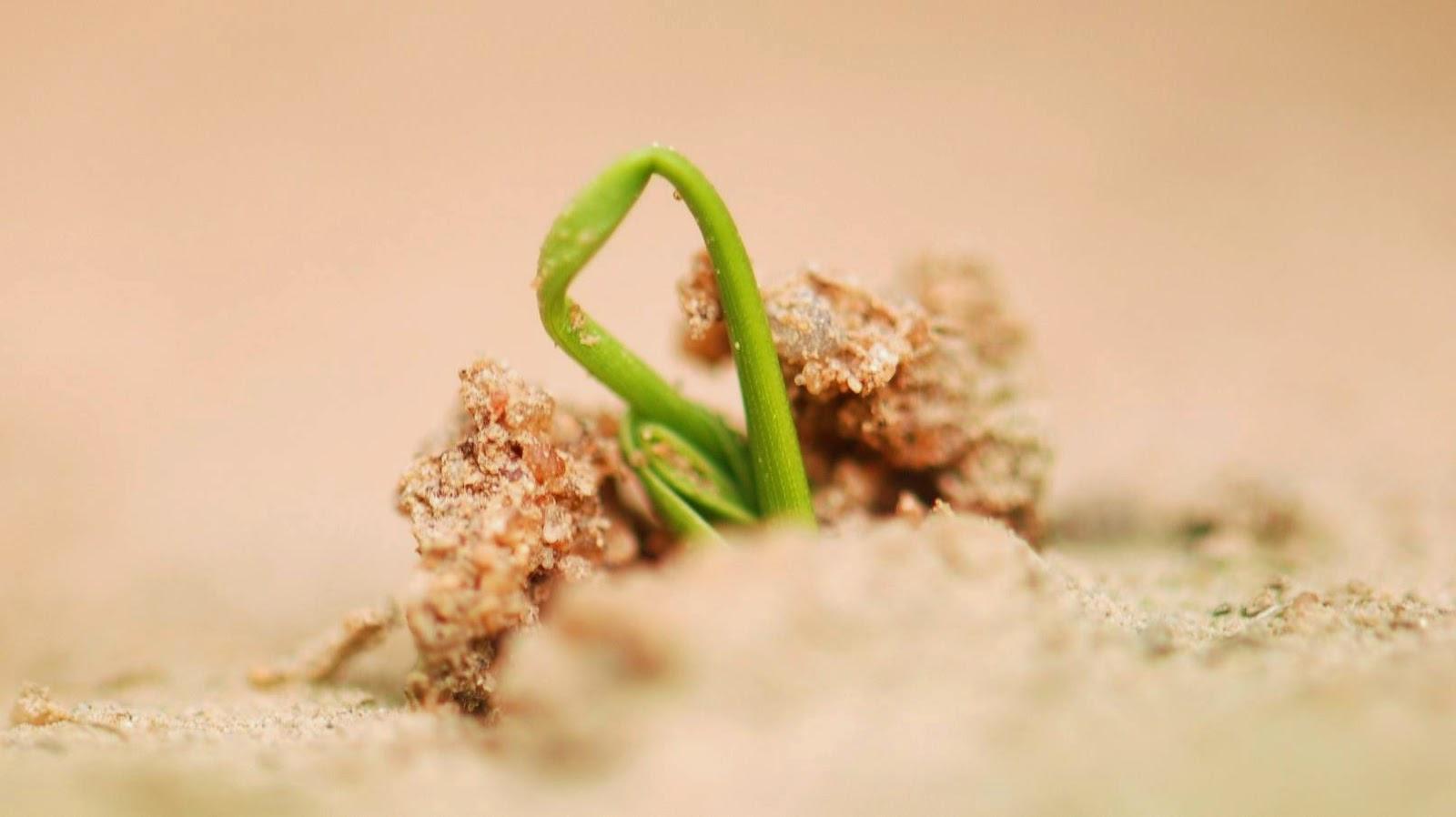 Germoglio di una pianta in un terreno arido
