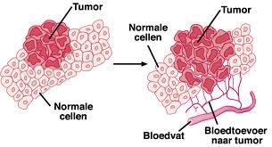 mitosis dan kanker