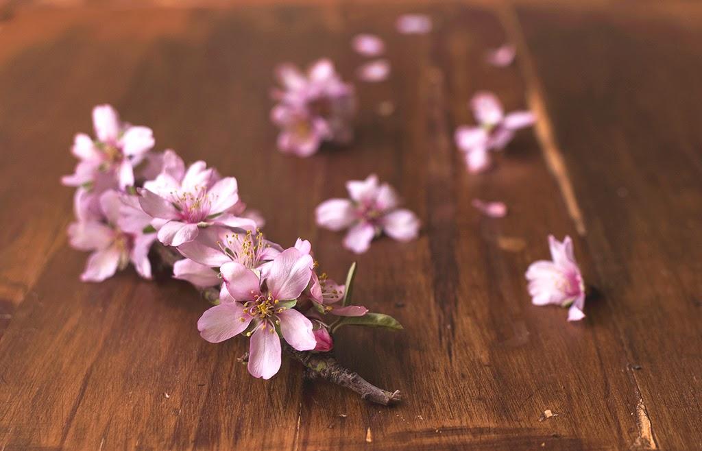 fotografía flores