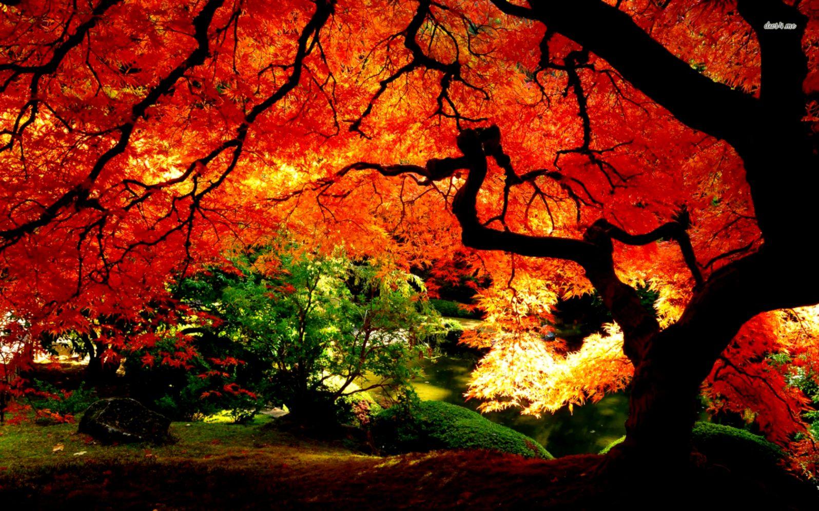 Fall Landscaping Garden Design Garden Design With Fall Landscape Wallpapers