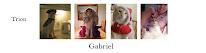 Länk till katternas blog