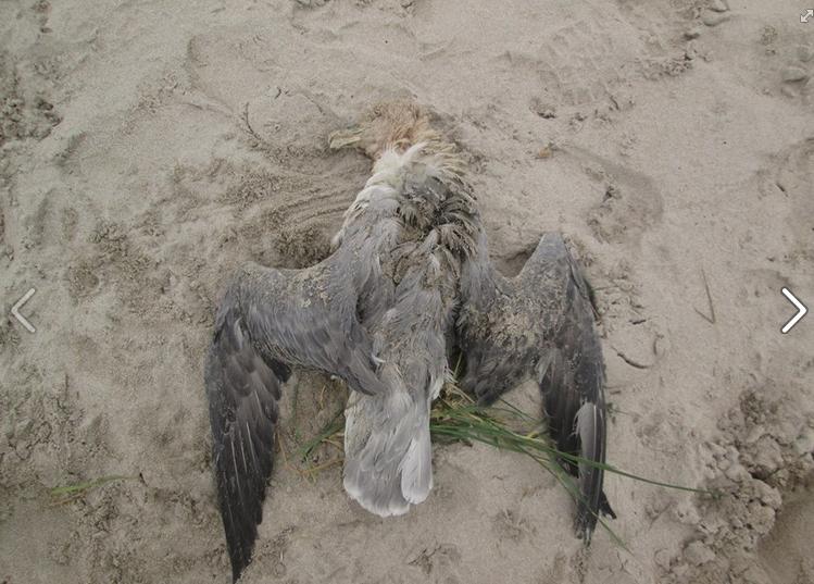 Ultimas especies añadidas a lista de aves de Villadún-Penarronda entre 2.012 y 2.015: