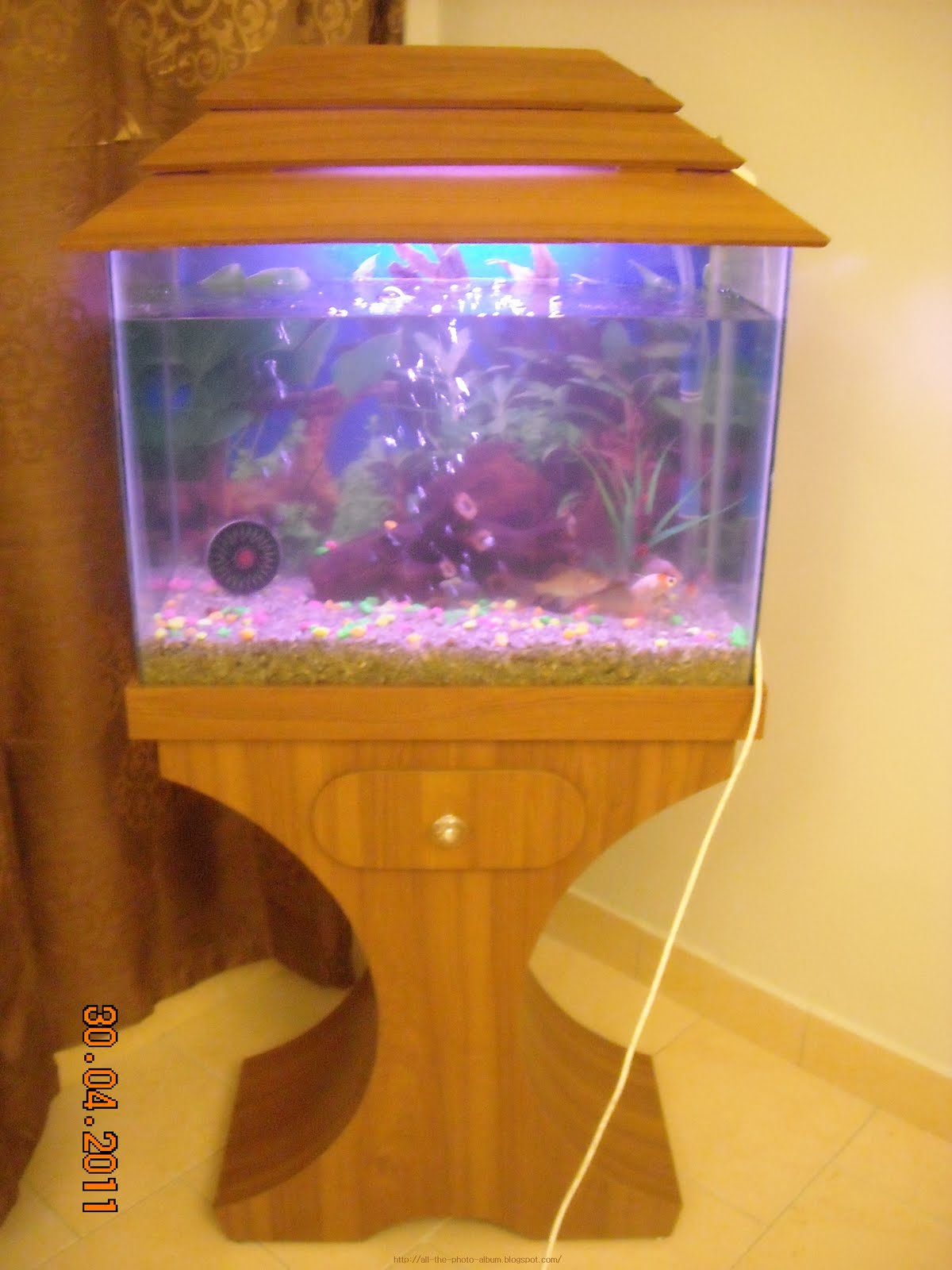Fish aquarium karachi - Fish Aquarium Full View With Glass Tank And Brown Wooden Top And Bottom Frame
