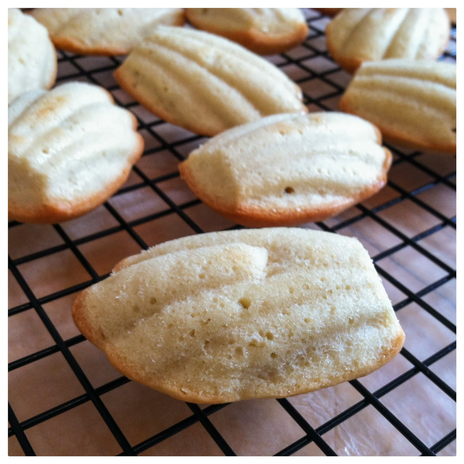 Courting Contentment: Vanilla Madeleines