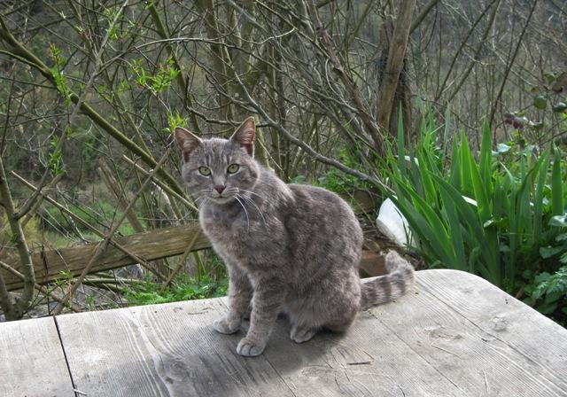 Saul arpino il giornaletto di saul del 5 giugno 2011 gatto antibiacco aldo capitini e cipax - Giardini dell acropoli arpino ...