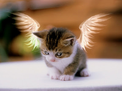 http://3.bp.blogspot.com/-QBpu6TiHPWg/Thvf9TckFnI/AAAAAAAAAAs/bTKx5W43M_c/s1600/Angel_Kitty.jpg