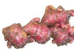 gambar jenis jahe merah dan khasiat jahe merah