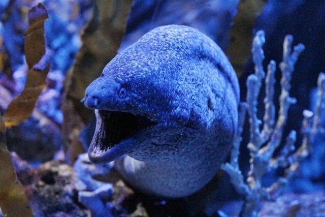 Sea Life Benalmádena, visitando el acuario de Málaga